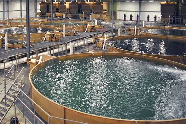 Indoor recirculating aquaculture system facility