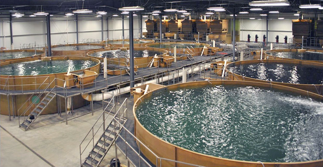 Sustainable Indoor Recirculating Aquaculture System