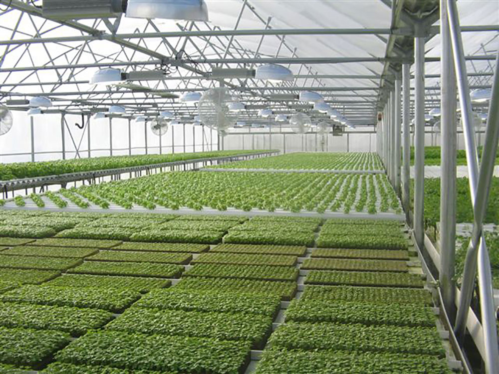 An aquaponics greenhouse utilizing a recirculating aquaculture system