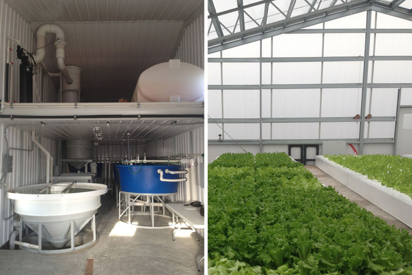 Aquaponics operation with greenhouse and aquaculture system